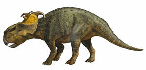 Pachyrhinosaurus canadensis