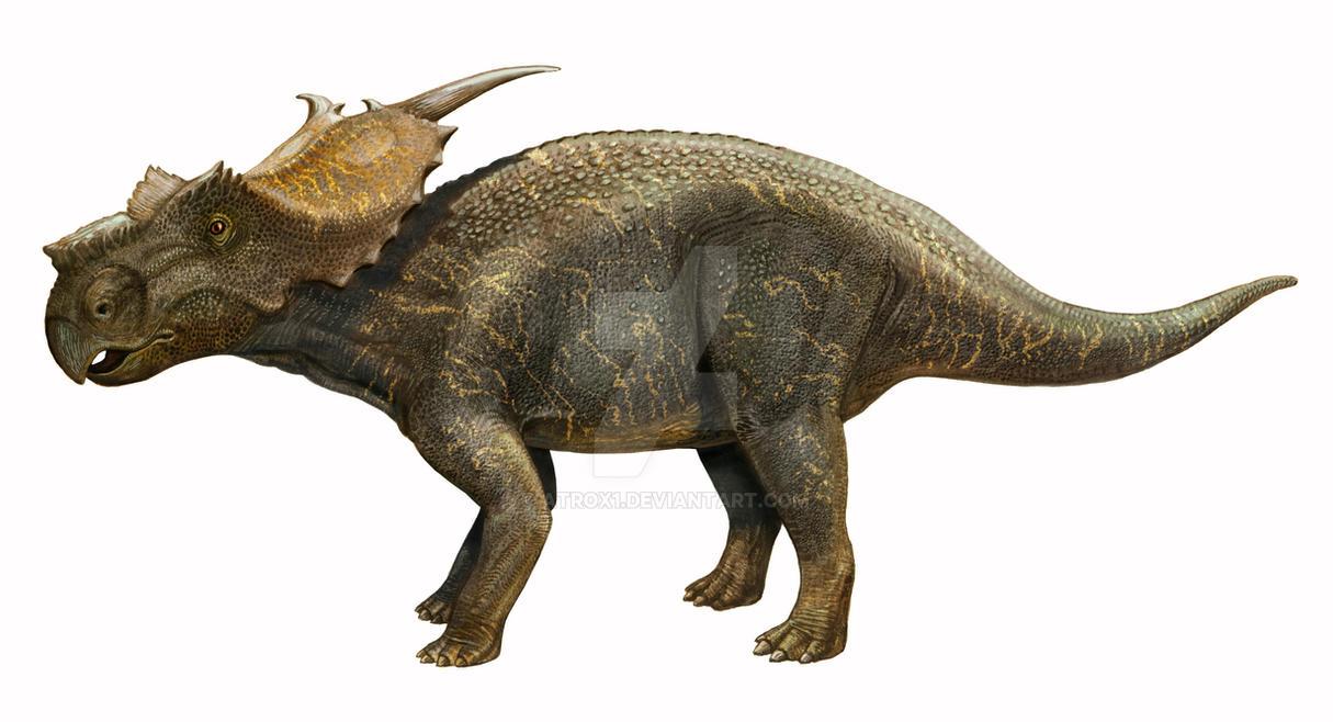 achelousaurus side