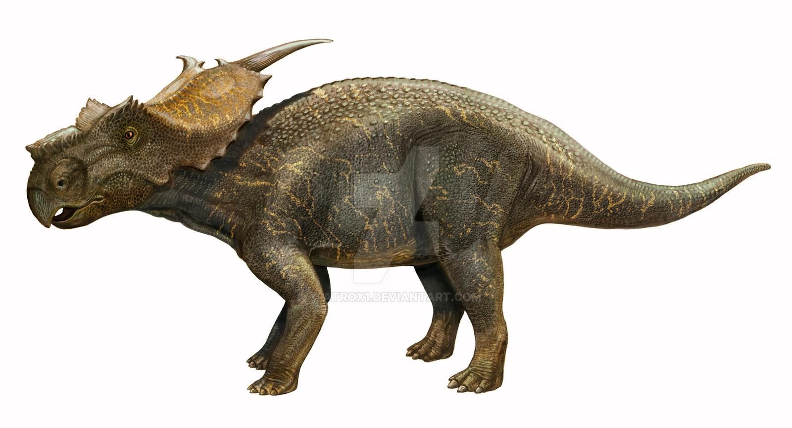 Achelousaurus horneri by atrox1