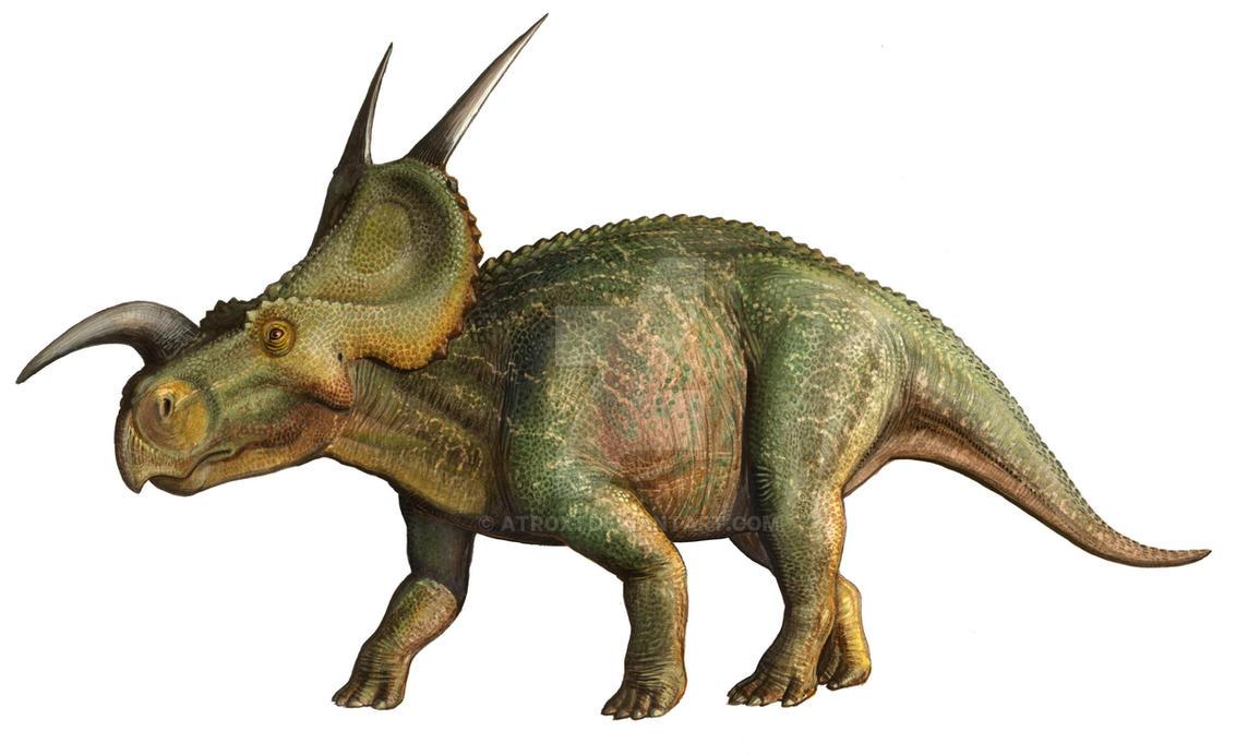 Einiosaurus procurvicornis by atrox1