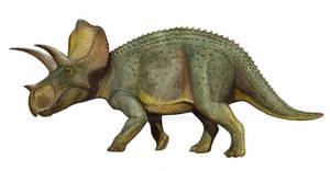 Ojoceratops fowleri