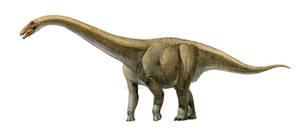 Rapetosaurus