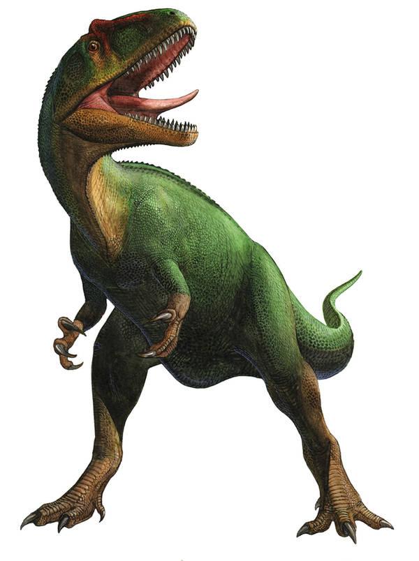 Saurophaganax maximus by atrox1