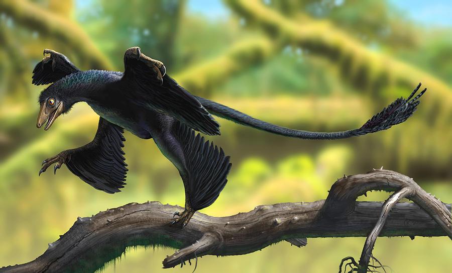 Microraptor by atrox1