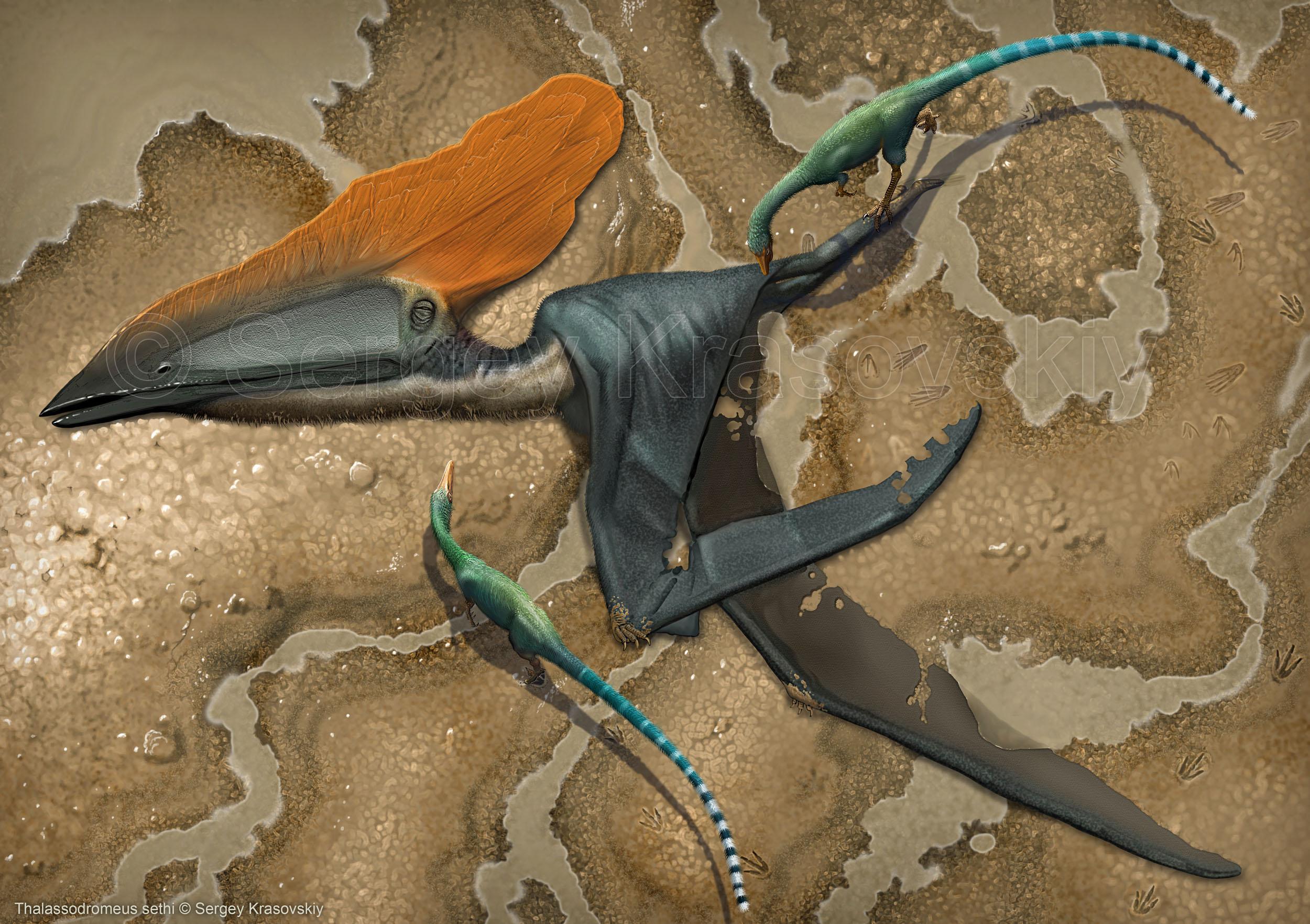 Thalassodromeus sethi by atrox1