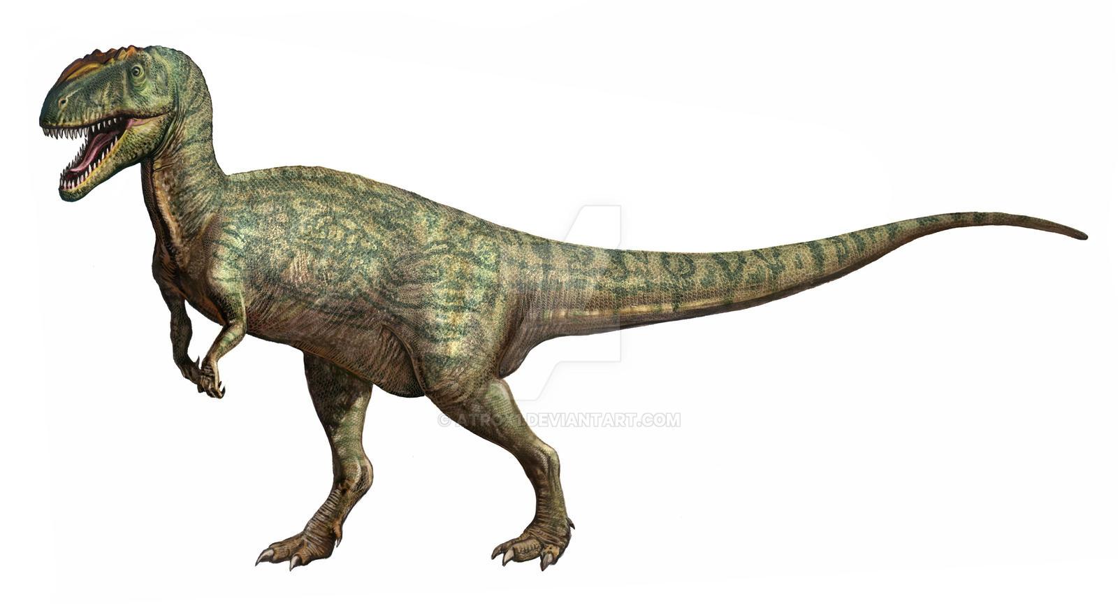 Metriacanthosaurus Metriacanthosaurus parkeri