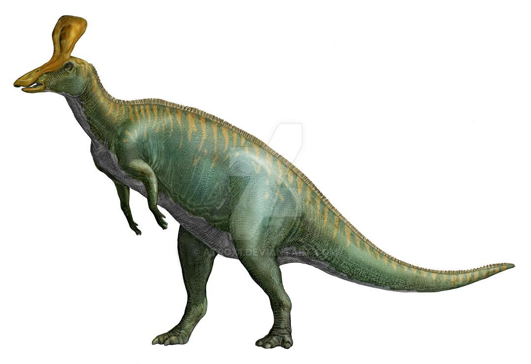 Tsintaosaurus spinorhinus by atrox1
