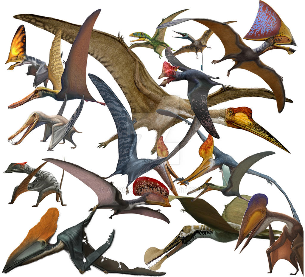 Resultado de imagen de pterosauria