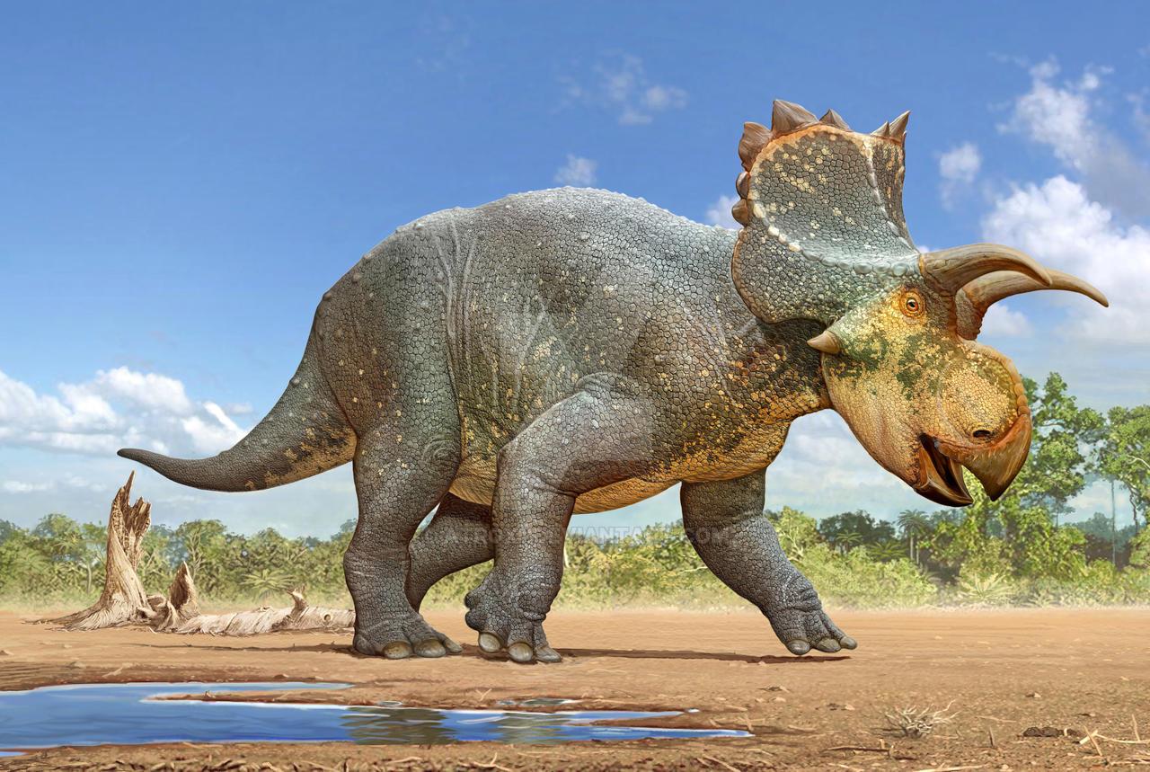 Crittendenceratops krzyzanowskii by atrox1