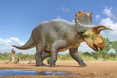 Crittendenceratops krzyzanowskii