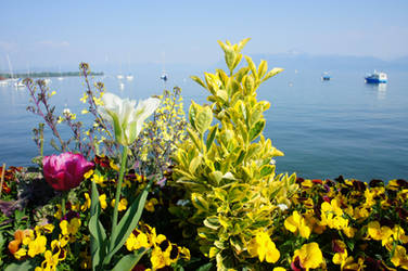 Flowers and Boats 2