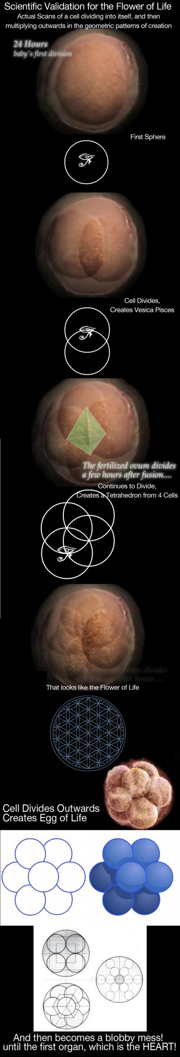 A Cells Transformation (FoL VALIDATION) by Duchednier