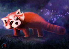 Red Panda by debussy01247