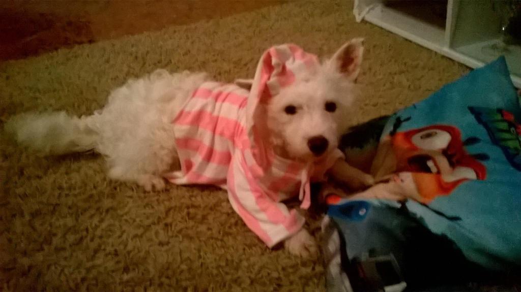 Puppy Pyjama by Beatrice-Dragon-Team