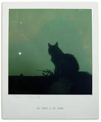 used to be my cat by CaroLevitt
