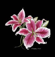 Star Gazer Lillies by karlajkitty