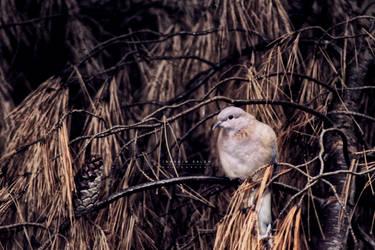 Pigeon On A Tree by khazadoom