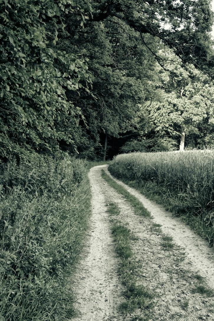 Zwischen Wald und Felde I by Putago