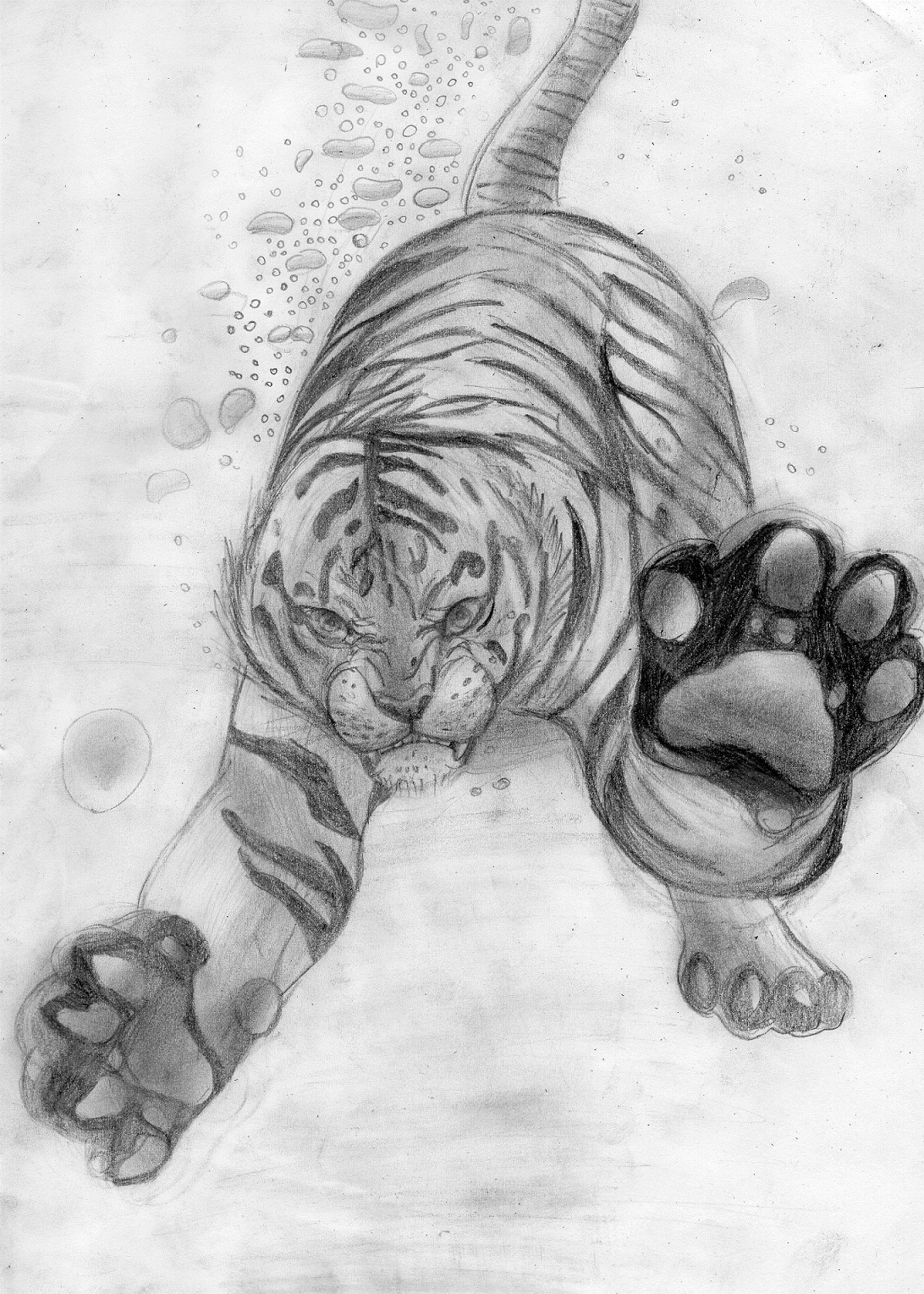 Drawings Of White Tigers White tiger  sketch  byWhite Tiger Drawings