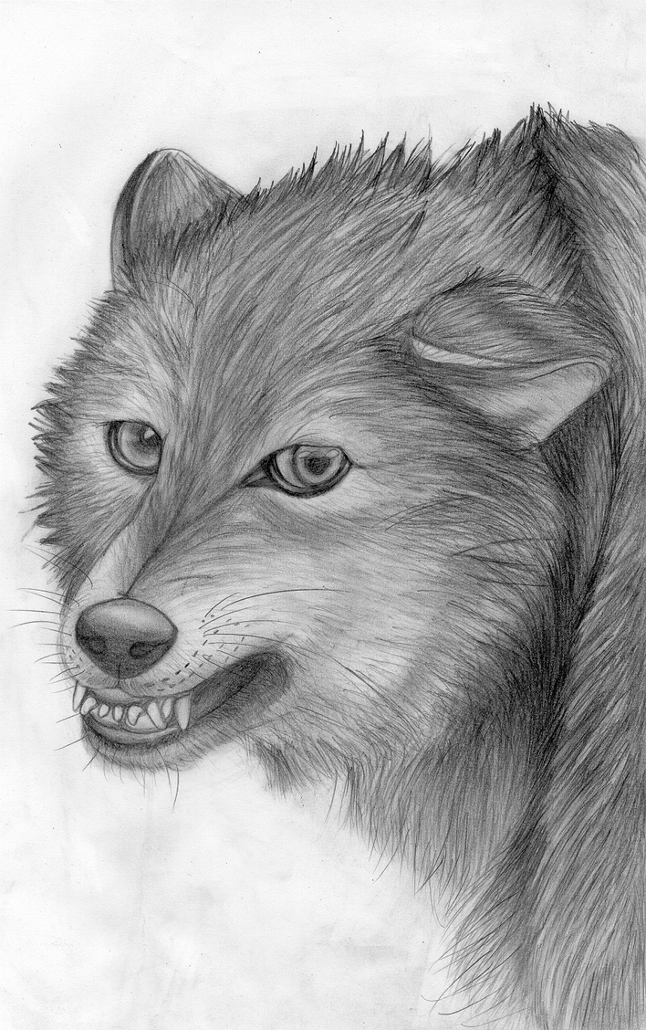 Angry Wolf by Takas15 on DeviantArt