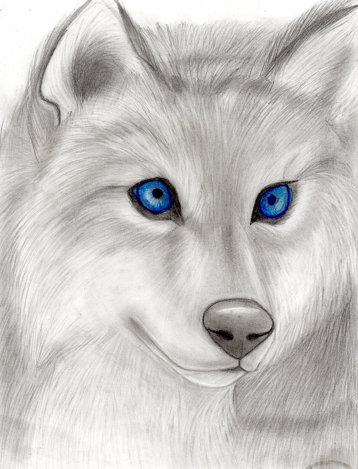 Wolf with blue eyes by Takas15 on DeviantArt