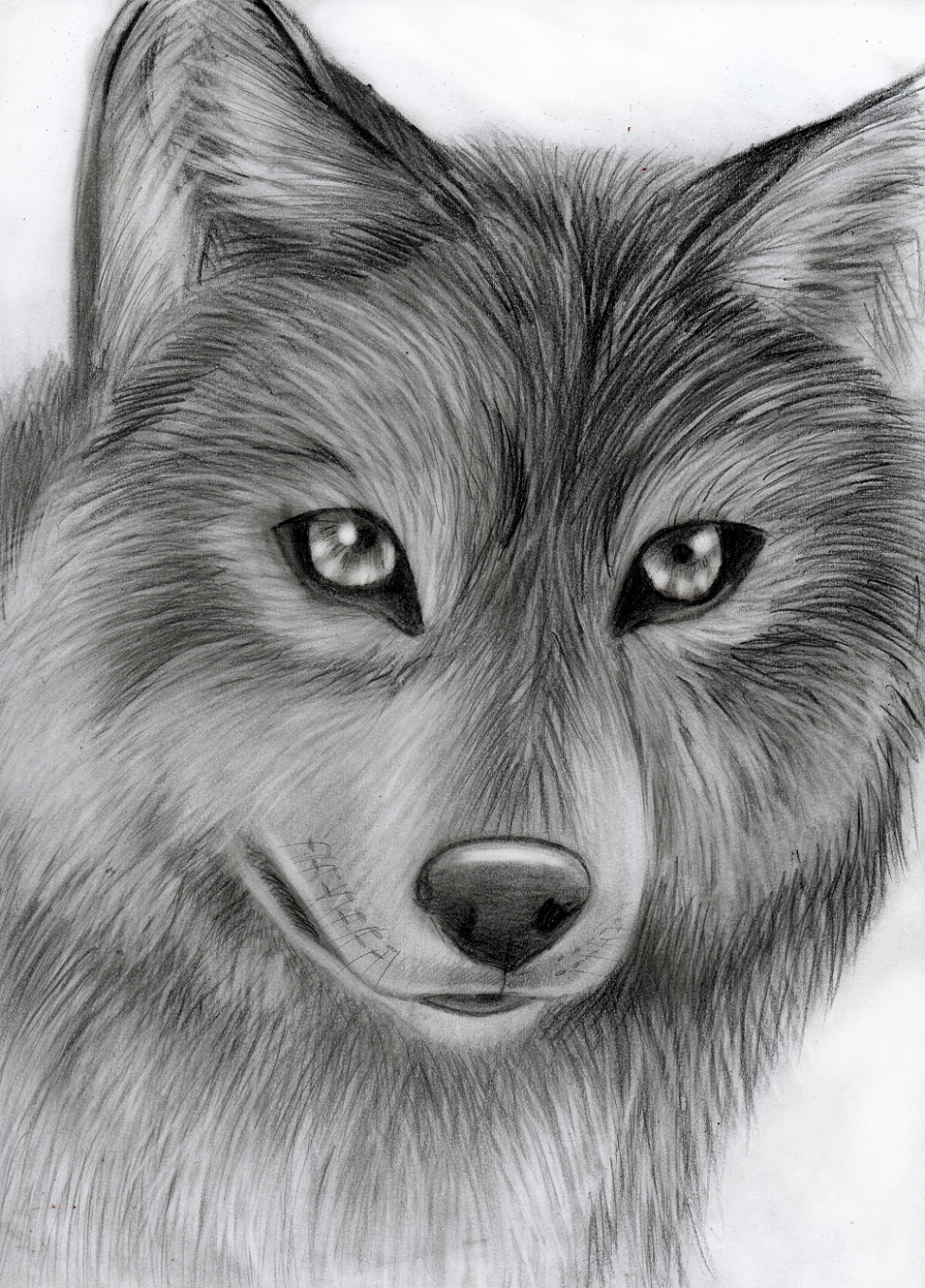 Speedart- wolf by Takas15