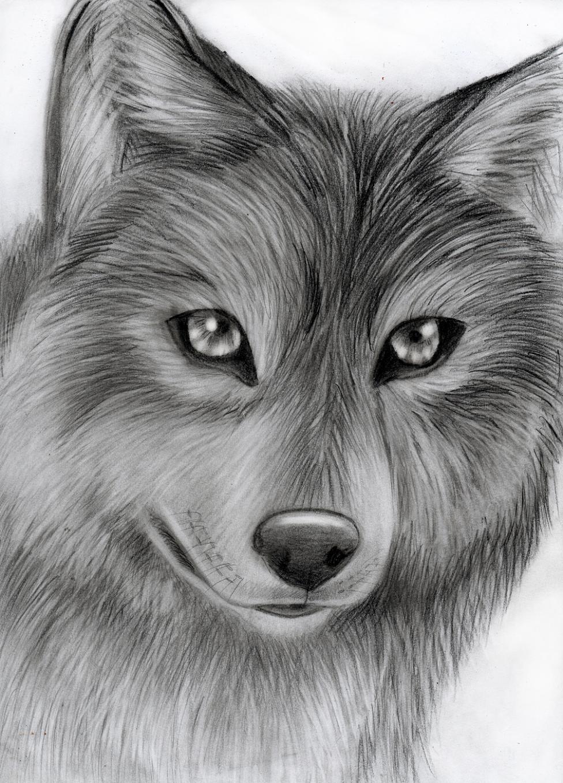 Speedart- wolf by Takas15