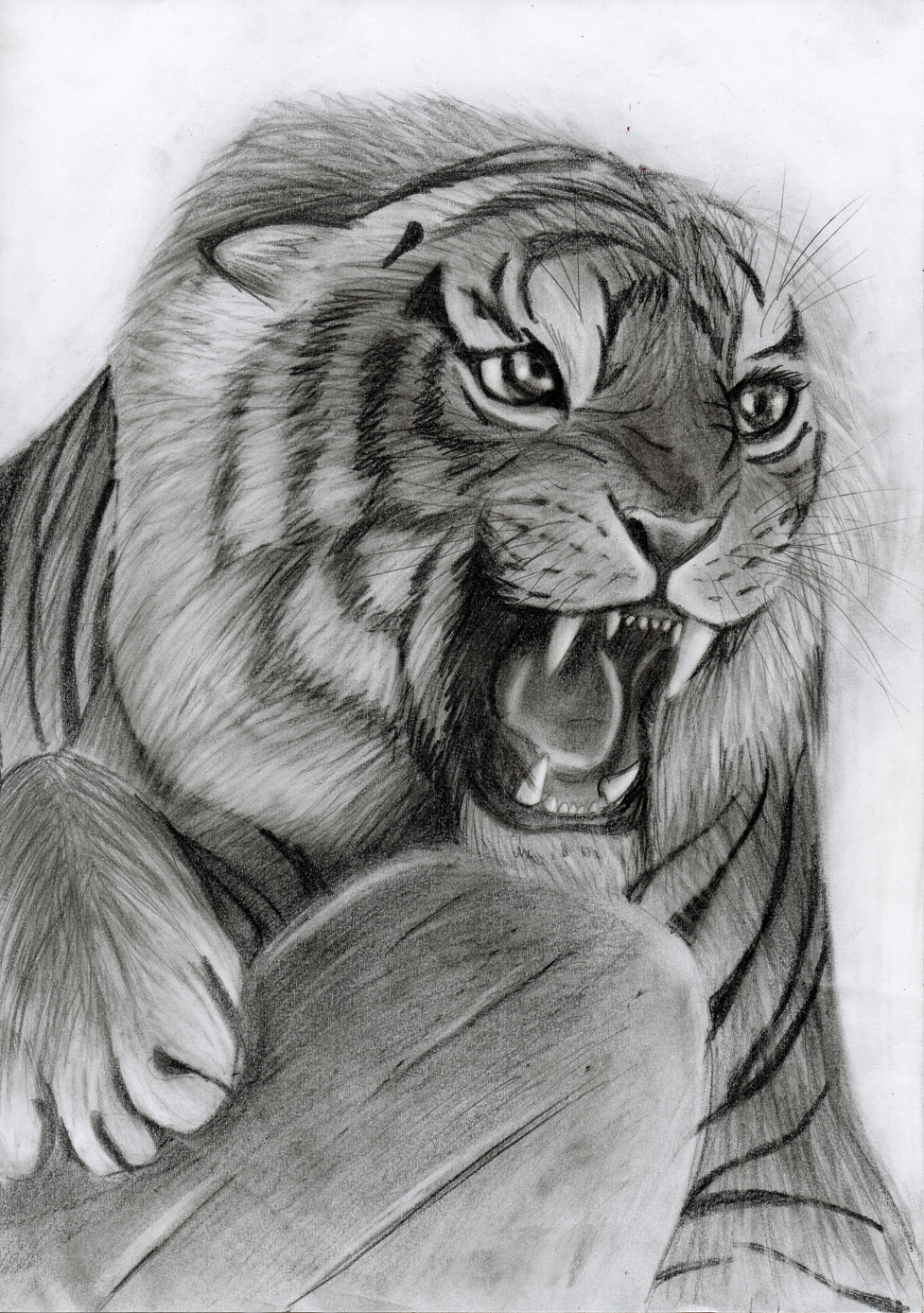 Angry tiger (UPDATE) by Takas15 on DeviantArt