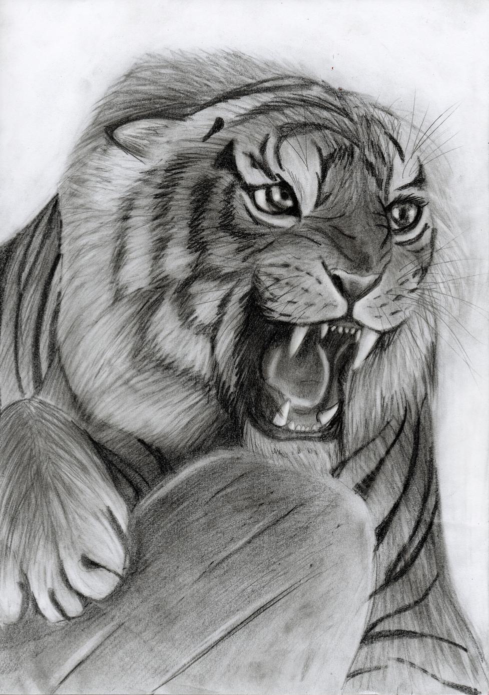 angry animal drawing - photo #16
