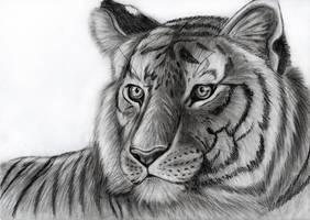 Tiger - speedart by Takas15