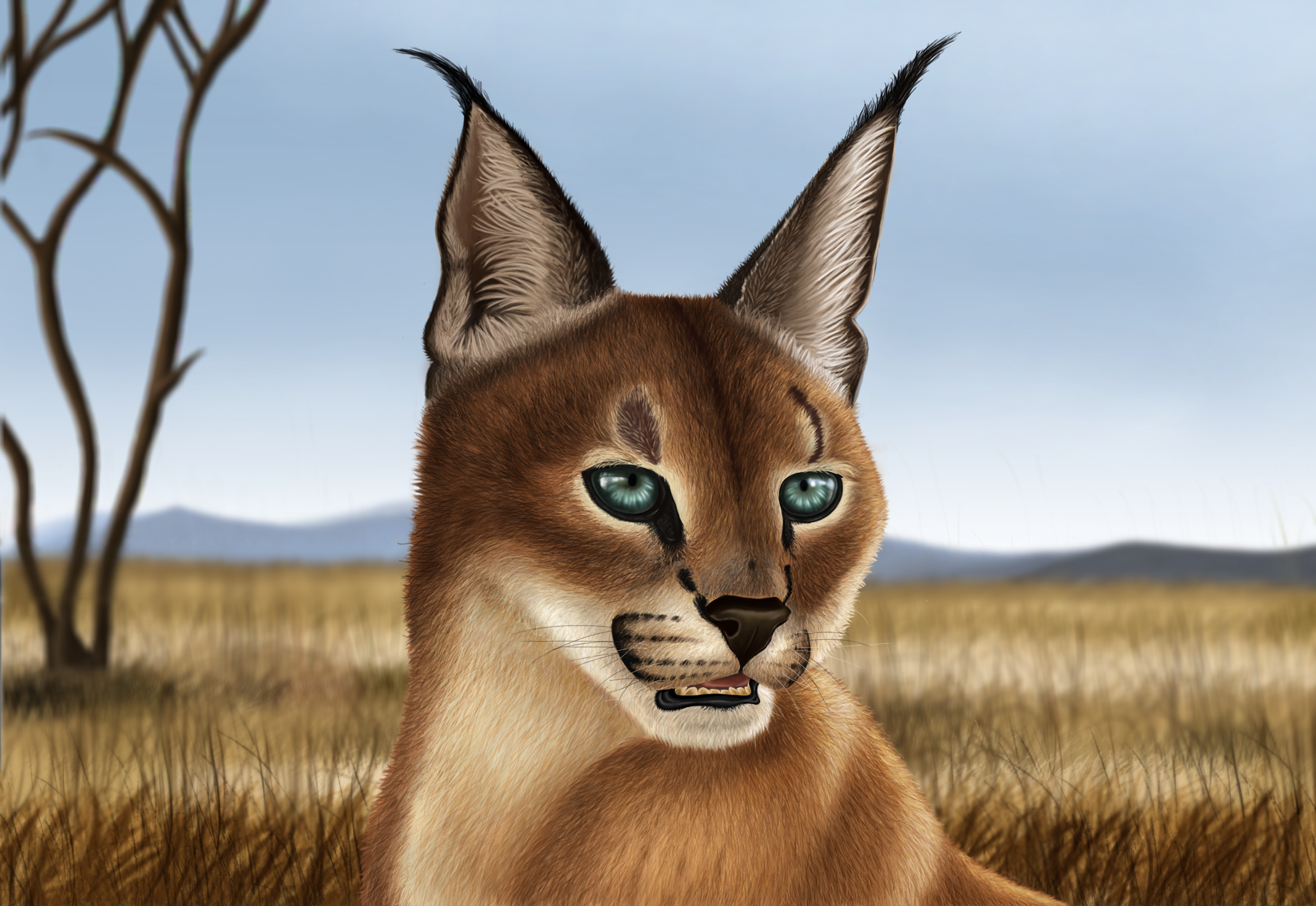 Caracal drawing - photo#7