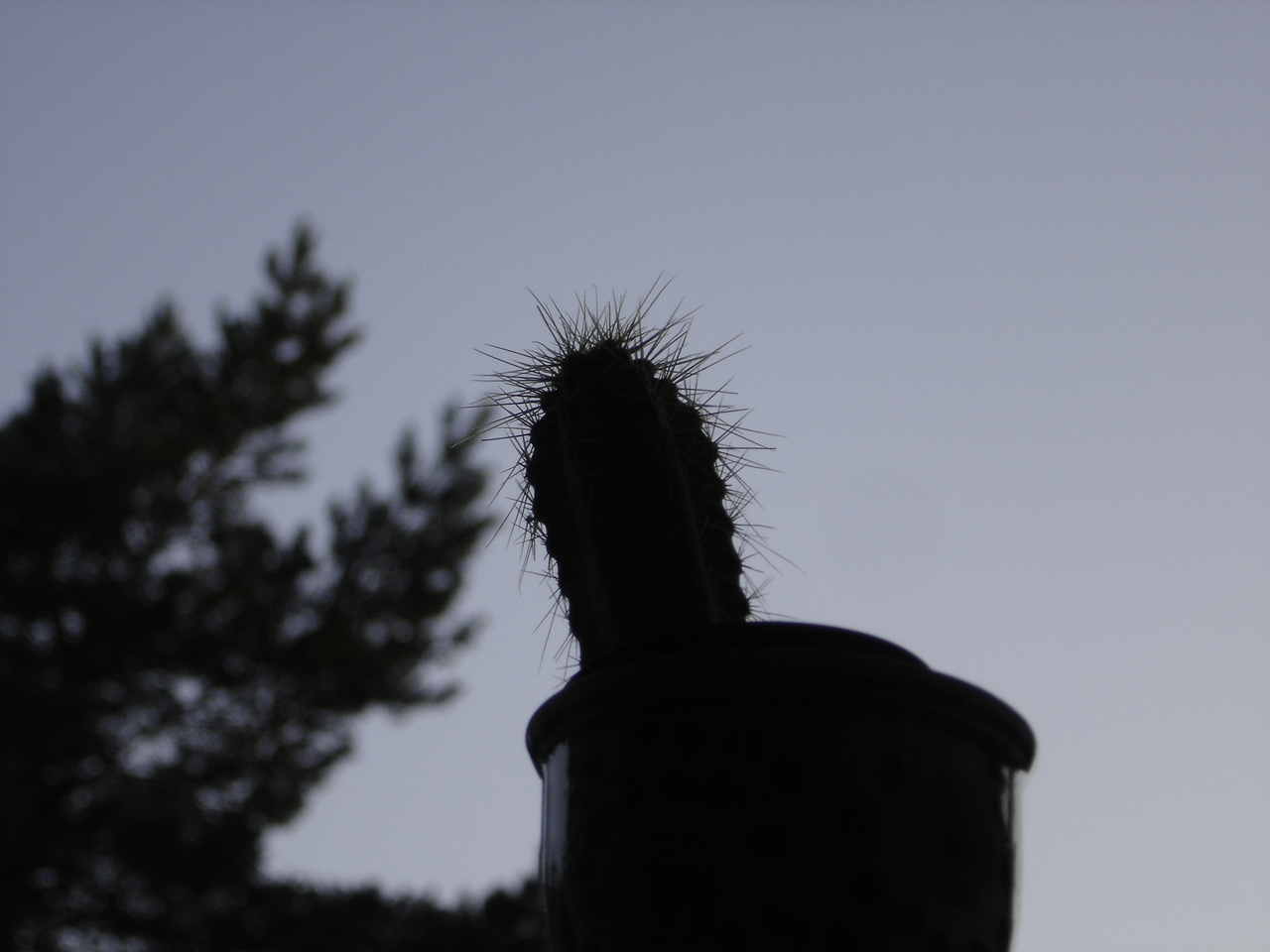 Spiky thingy