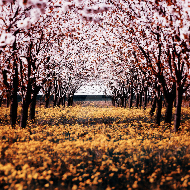 Spring by f-f-w-d