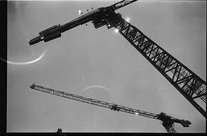 cranes by kutas