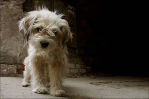 Dog by kutas