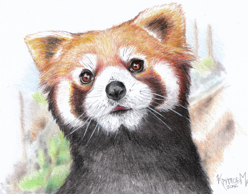 Red Panda by Mixaoops