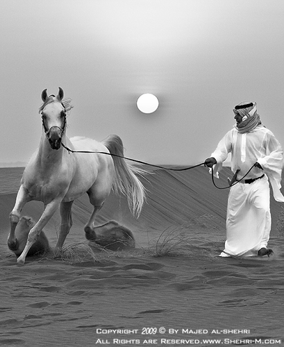 Arabian Horse 3 by shehri