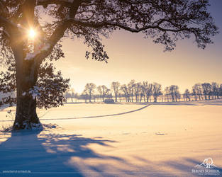 Winter Tree by BSGuyIncognito