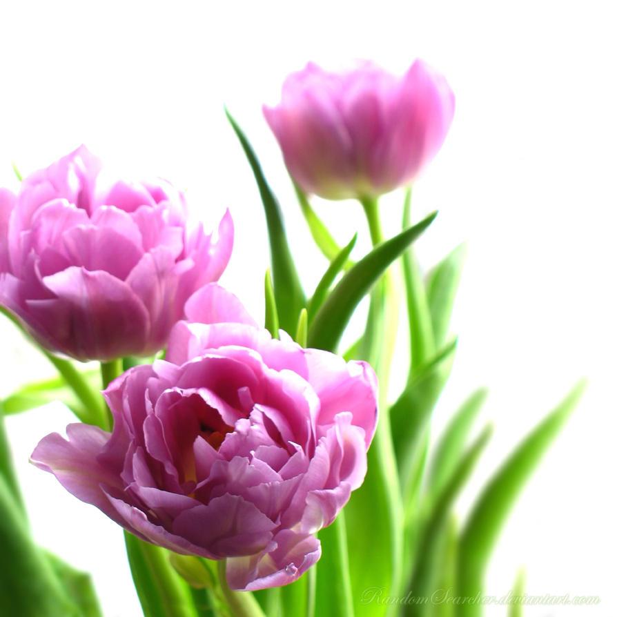 Springtime Melodies by RandomSearcher