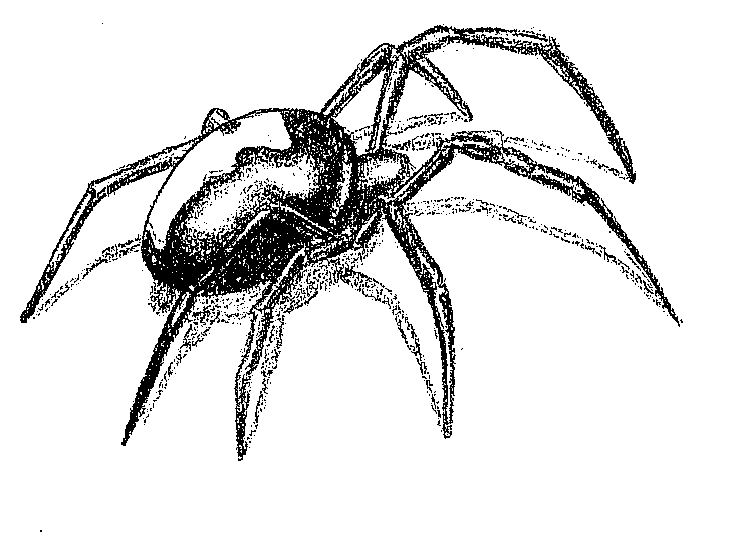 Red Back Spider Tattoo Design By Blackspindl8 On Deviantart