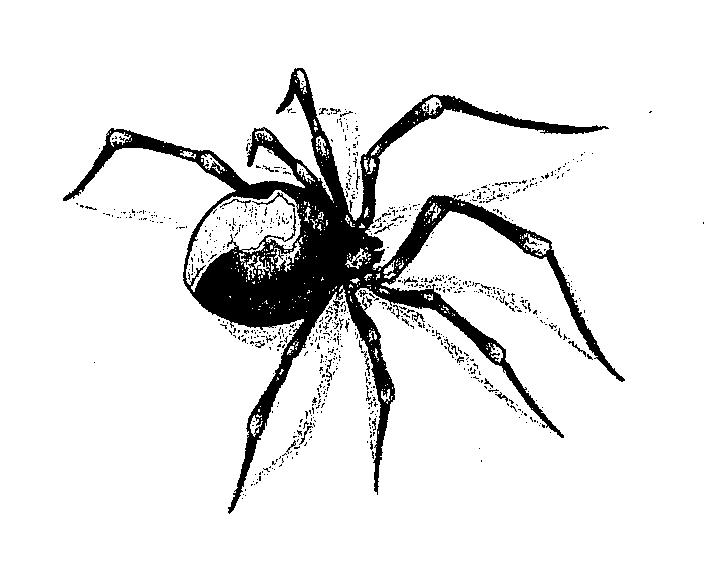 Red back spider tattoo design 2 by Blackspindl8 on DeviantArt