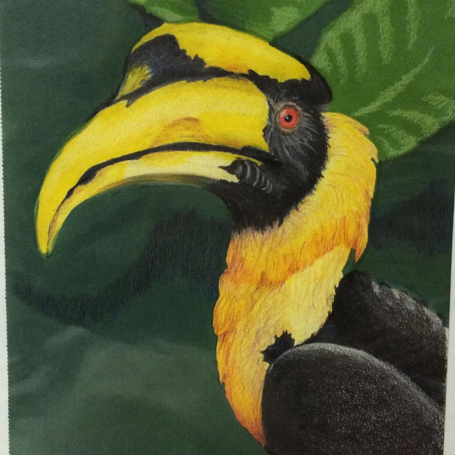 Hornbill by DemonWolf121