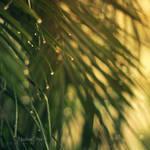 Summer Rain by catchingfyre