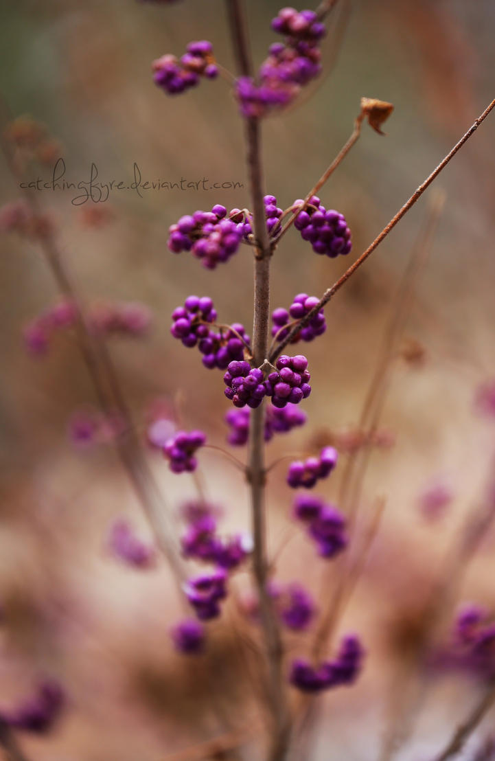 Purple Berries by catchingfyre