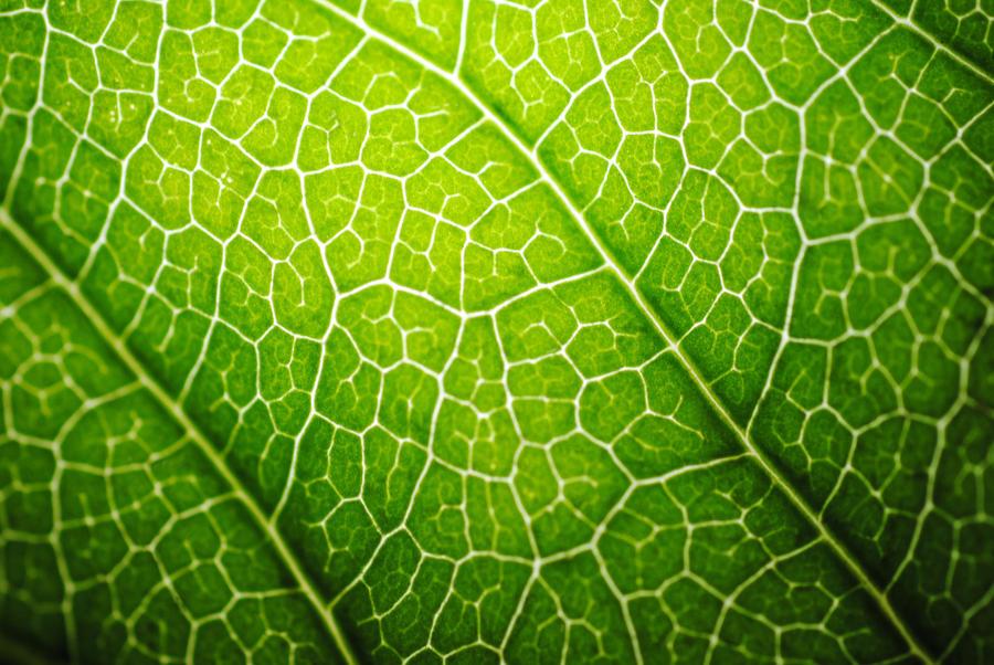 leaf by Steeeffiii