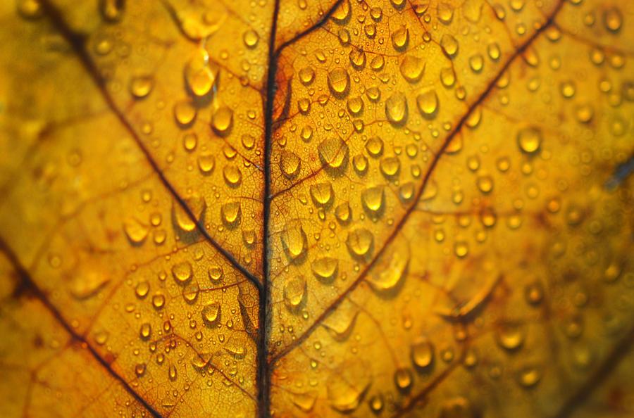 autumn leaf by Steeeffiii