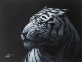 Silence of the tiger