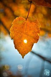 Fall at Echo Lake by devignelements