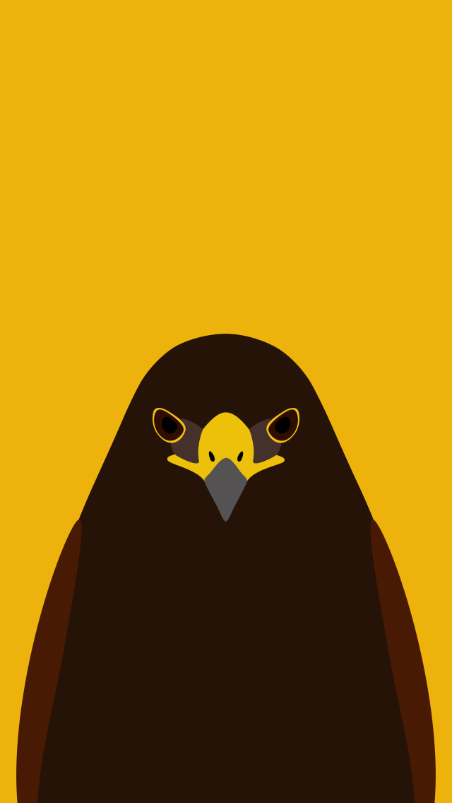 Harris's Hawk - bird wallpaper for iPhone by birnimal