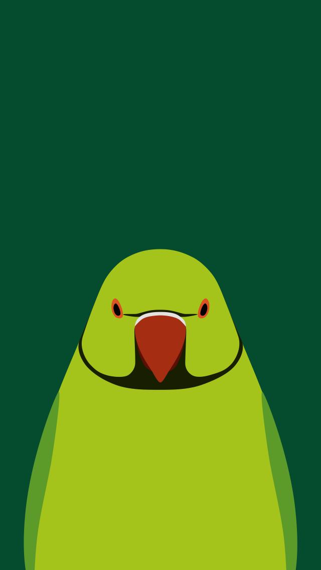 Rose-ringed Parakeet - bird wallpaper for iPhone by birnimal
